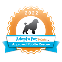 Poodle 2014 Badge